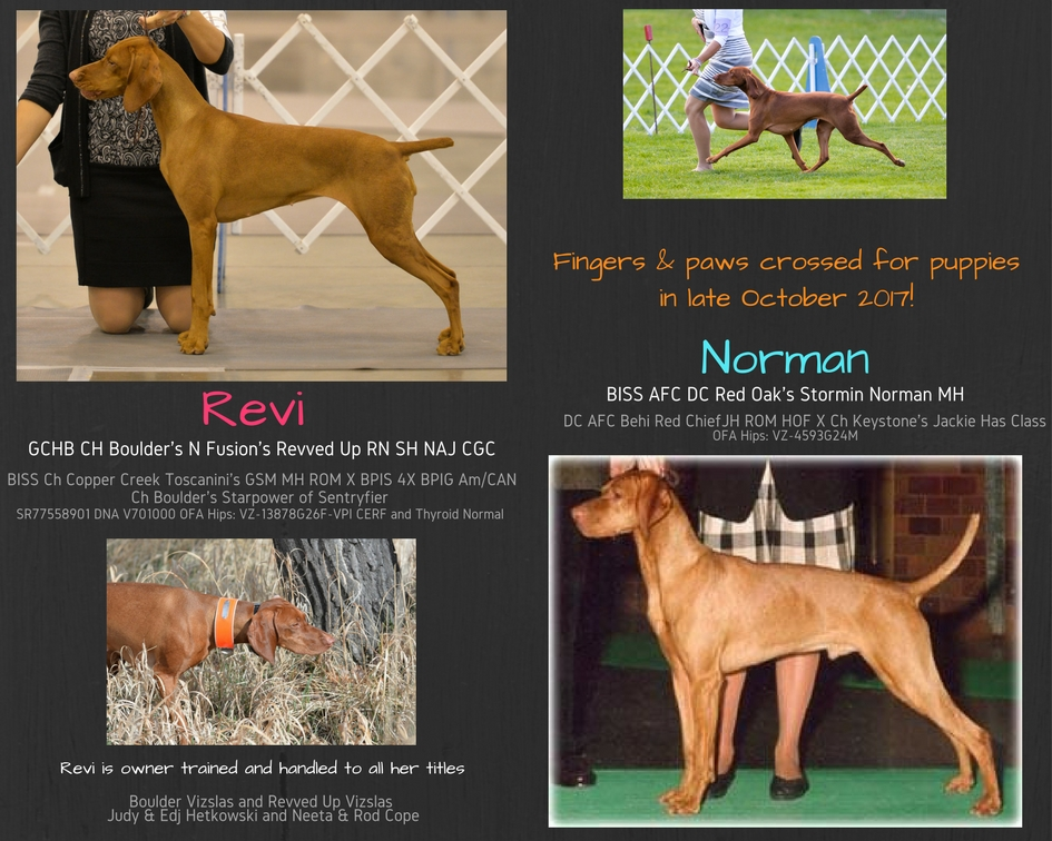 """Revi"" GCHB CH Boulder's N Fusion's Revved Up RN SH NAJ CGC X ""Norman"" BISS AFC DC Red Oak's Stormin Norman MH"