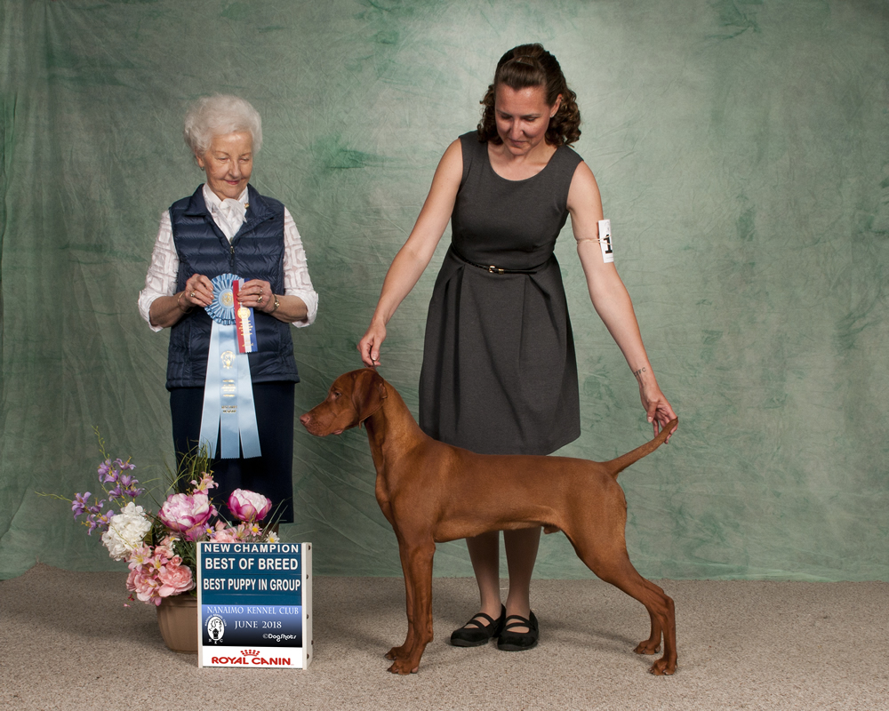 7 month Saylor new Canandian Ch -- from the first breeding of Pre x Lela
